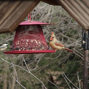 Resources for Birdathon Counters to participate without leaving home