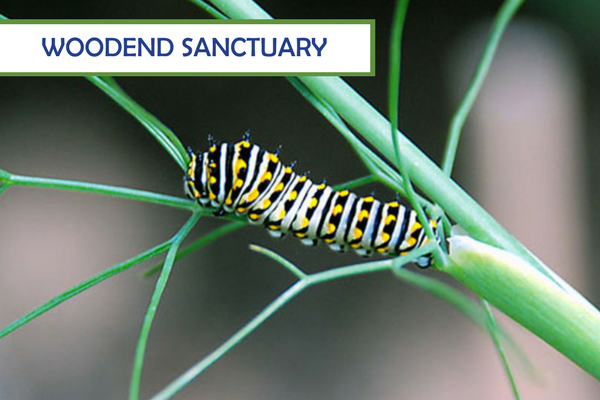Woodend Sanctuary