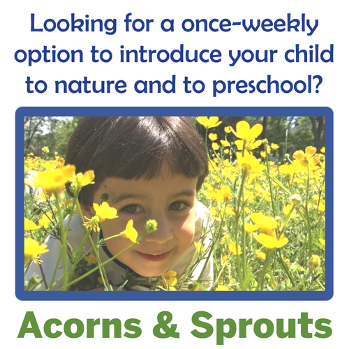 Audubon Nature Preschool is a nature-based preschool with education and environmental programs for children aged 5 and younger outside Washington, DC in Chevy Chase, MD.