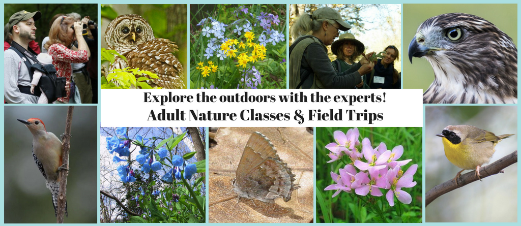 Adult Nature Classes and Field Trips