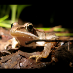 Stream Wood Frog by Dave Huth