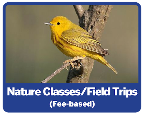 Nature Classes and Field Trips (fee-based)