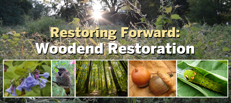 Woodend Restoration - Nature for All