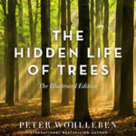 Hidden Life of Trees Illustrated