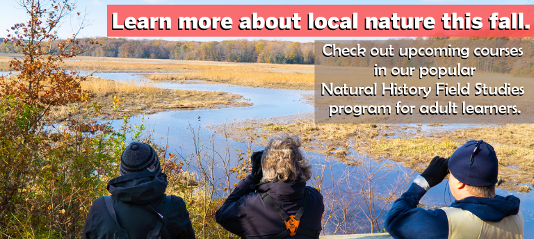 Upcoming Natural History Field Studies (NHFS) Classes for Fall