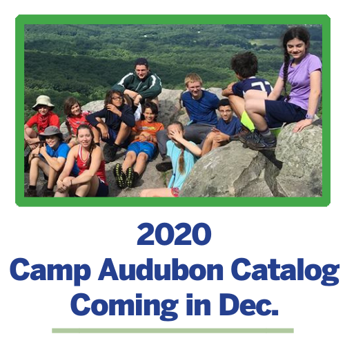 Camp Audubon offers nature-based summer camps for youth Pre-K through High School outside Washington, DC in Chevy Chase, MD.