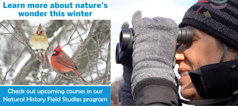 Upcoming Natural History Field Studies (NHFS) Classes for Winter