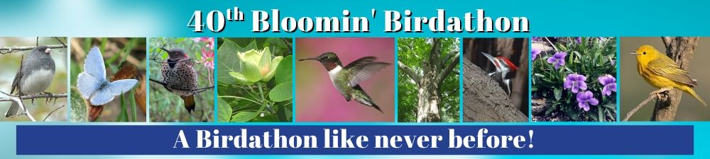 Audubon Naturalist Society's 40th Bloomin' Birdathon - A Birdathon Like Never Before!