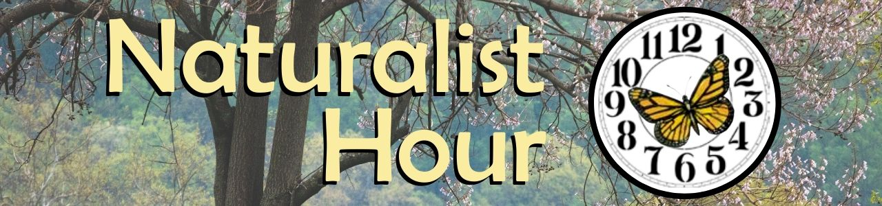 ANS Naturalist Hour virtual learning opportunities