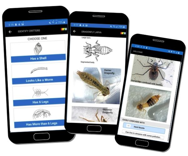 Visual keys lead you through identifying 30 commonly found critters. Identification screens include line drawings, photos and more!​