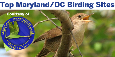 Best Maryland and D.C. Birding Sites by the Maryland Ornithological Society